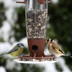 birds feeder